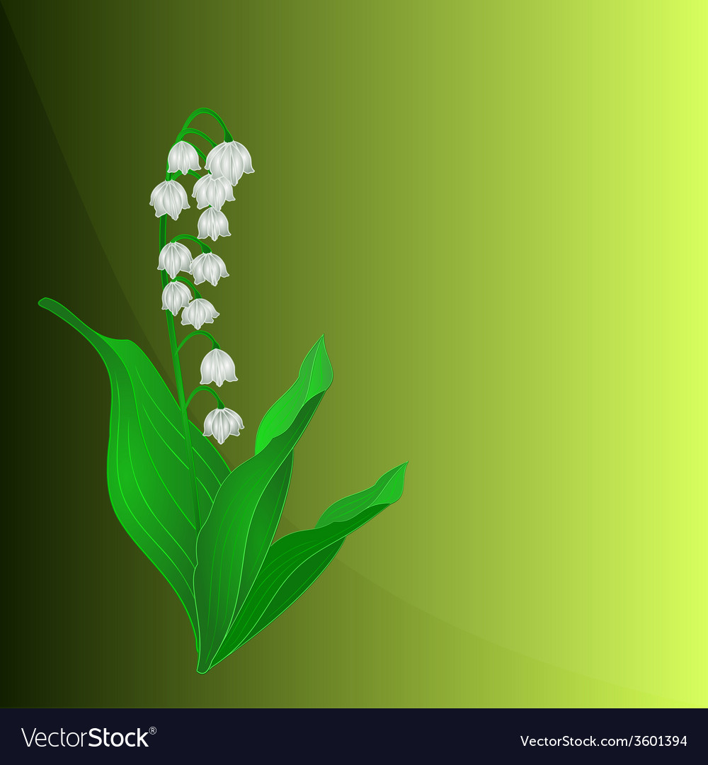 Lily of the valley spring flower green background vector | Price: 1 Credit (USD $1)