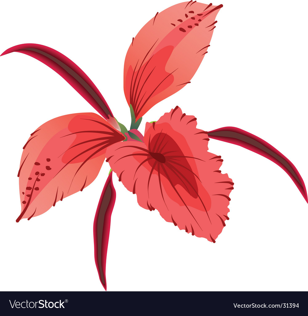Orchid illustration generated on comp vector | Price: 1 Credit (USD $1)