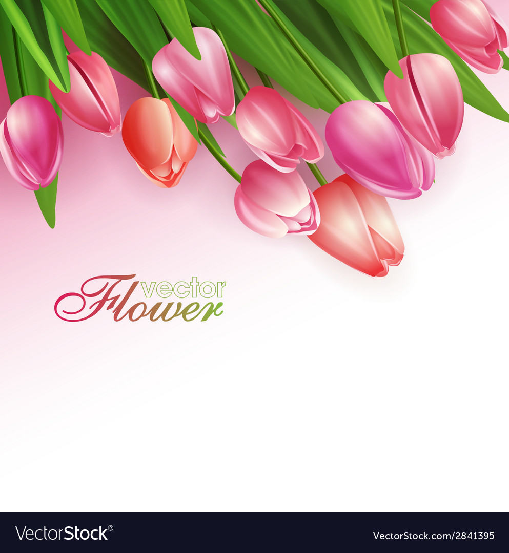 Beautiful flowers background vector | Price: 1 Credit (USD $1)