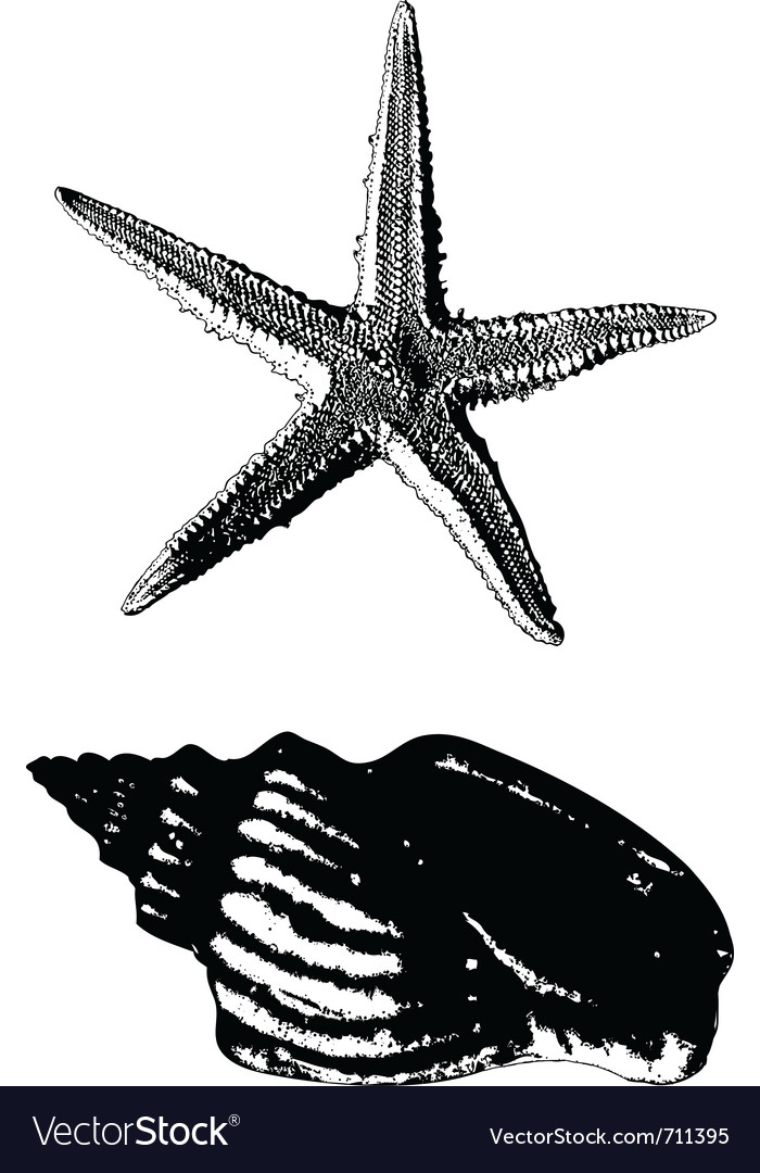 Shell and starfish vector | Price: 1 Credit (USD $1)
