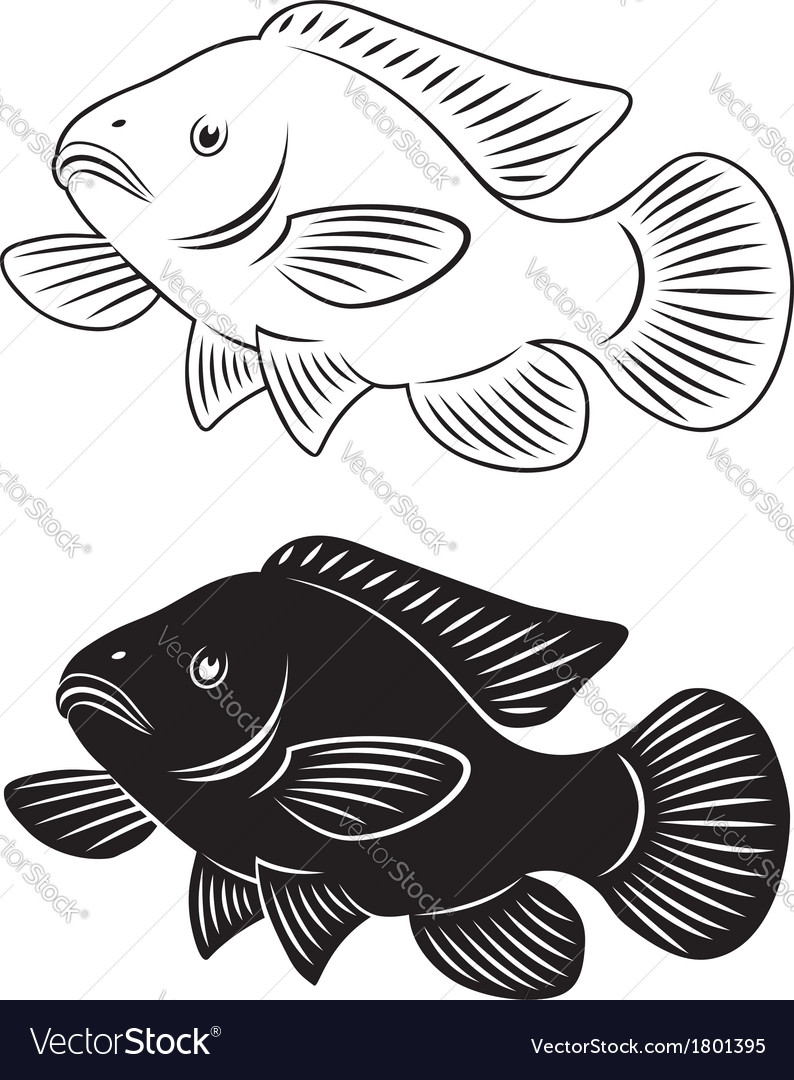 Tilapia fish vector | Price: 1 Credit (USD $1)