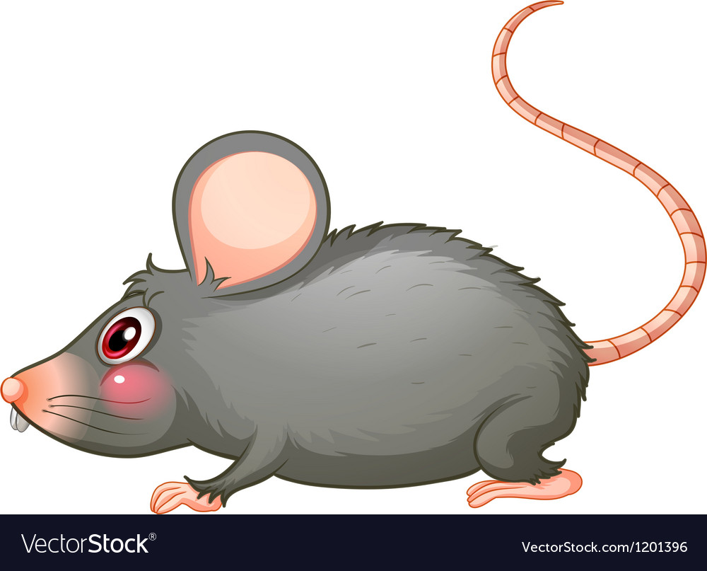 A gray rat vector | Price: 1 Credit (USD $1)