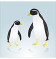 Two penguins eps10 vector