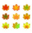 Maple autumn leaves vector