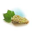 Grapes white vector