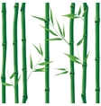 Bamboo seamless vector