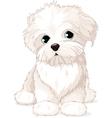 Maltese puppy dog vector