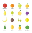 Flat elements for web design fruits and berries vector