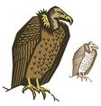Vulture bird vector