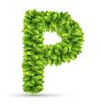 Letter p alphabet of green leaves vector