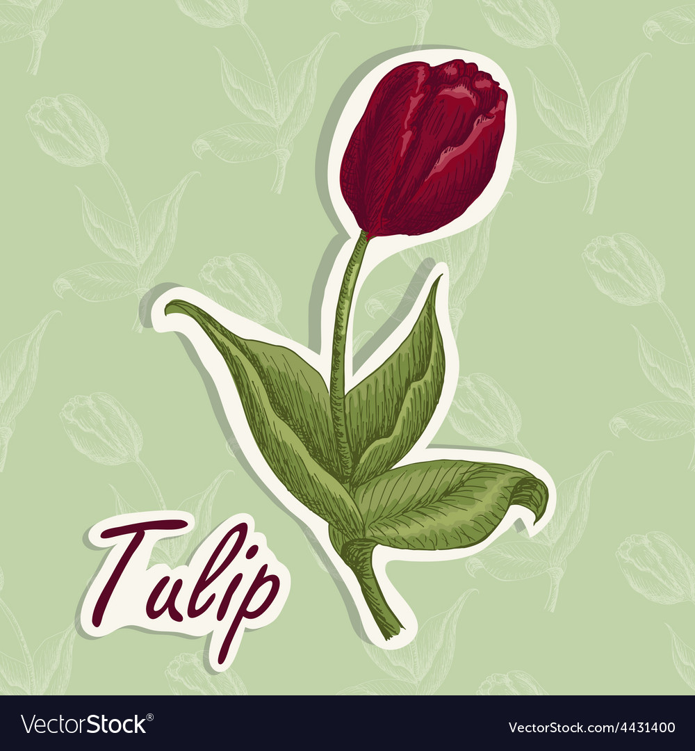 Background with flower hand drawing of a tu vector   Price: 1 Credit (USD $1)