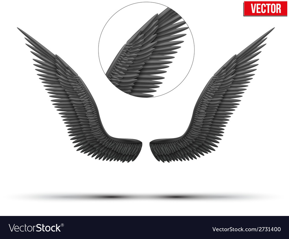 Black open angel wings vector | Price: 1 Credit (USD $1)