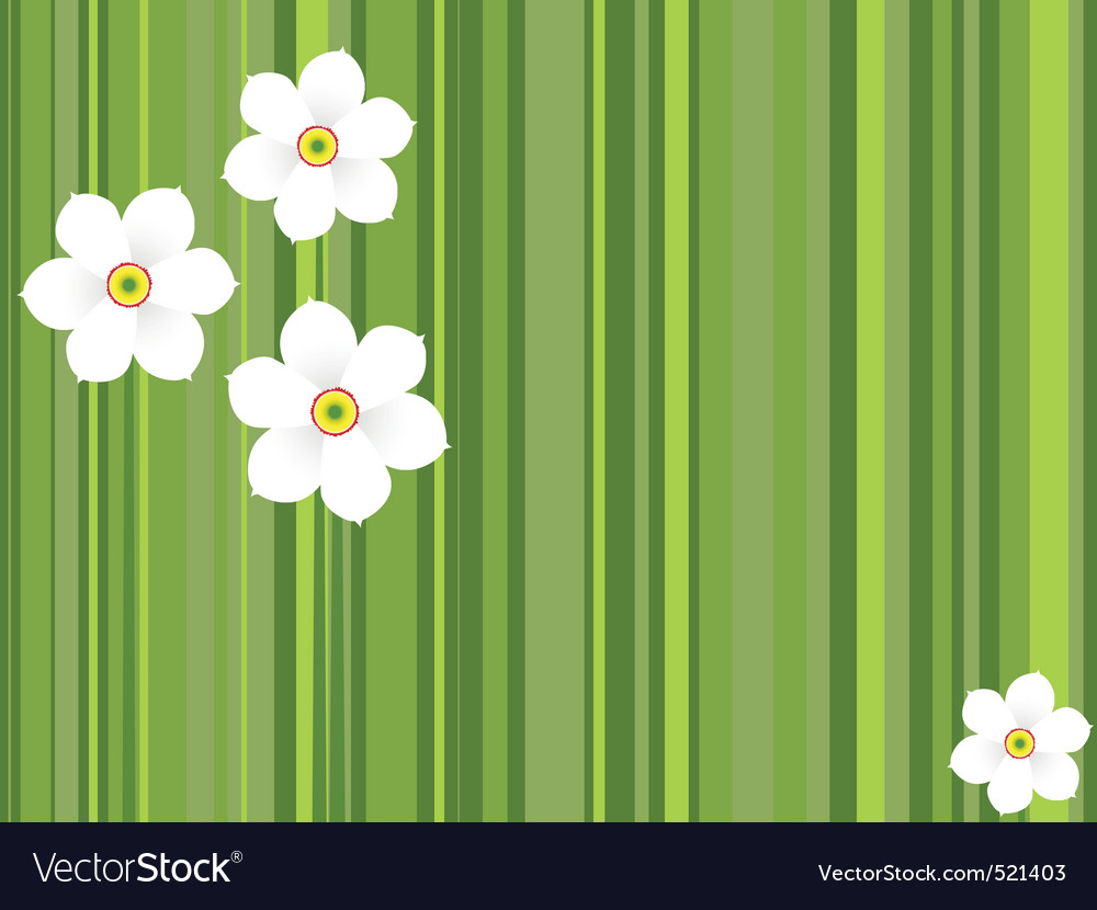 Flowers daffodils vector | Price: 1 Credit (USD $1)