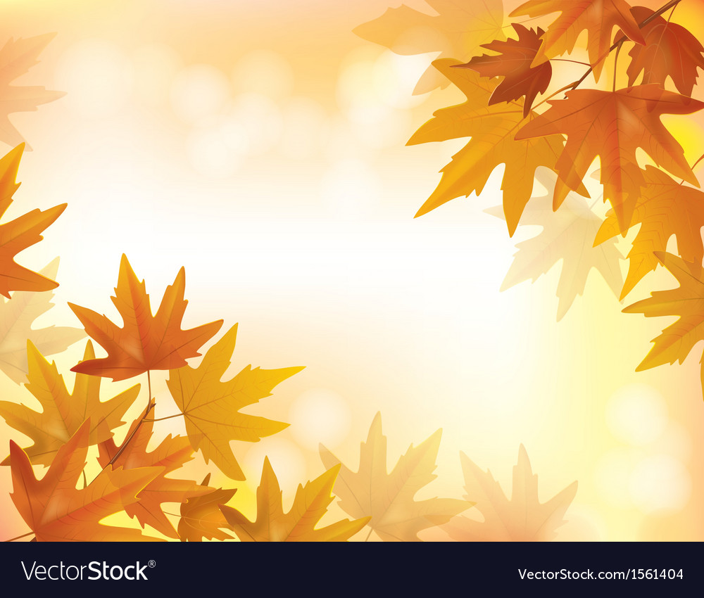 Branch of yellow maple vector | Price: 1 Credit (USD $1)