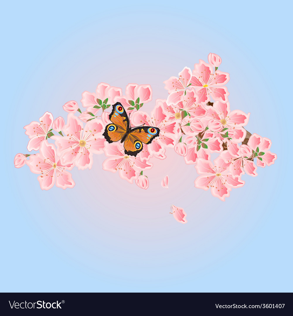 Butterfly and cherry blossoms spring background vector | Price: 1 Credit (USD $1)