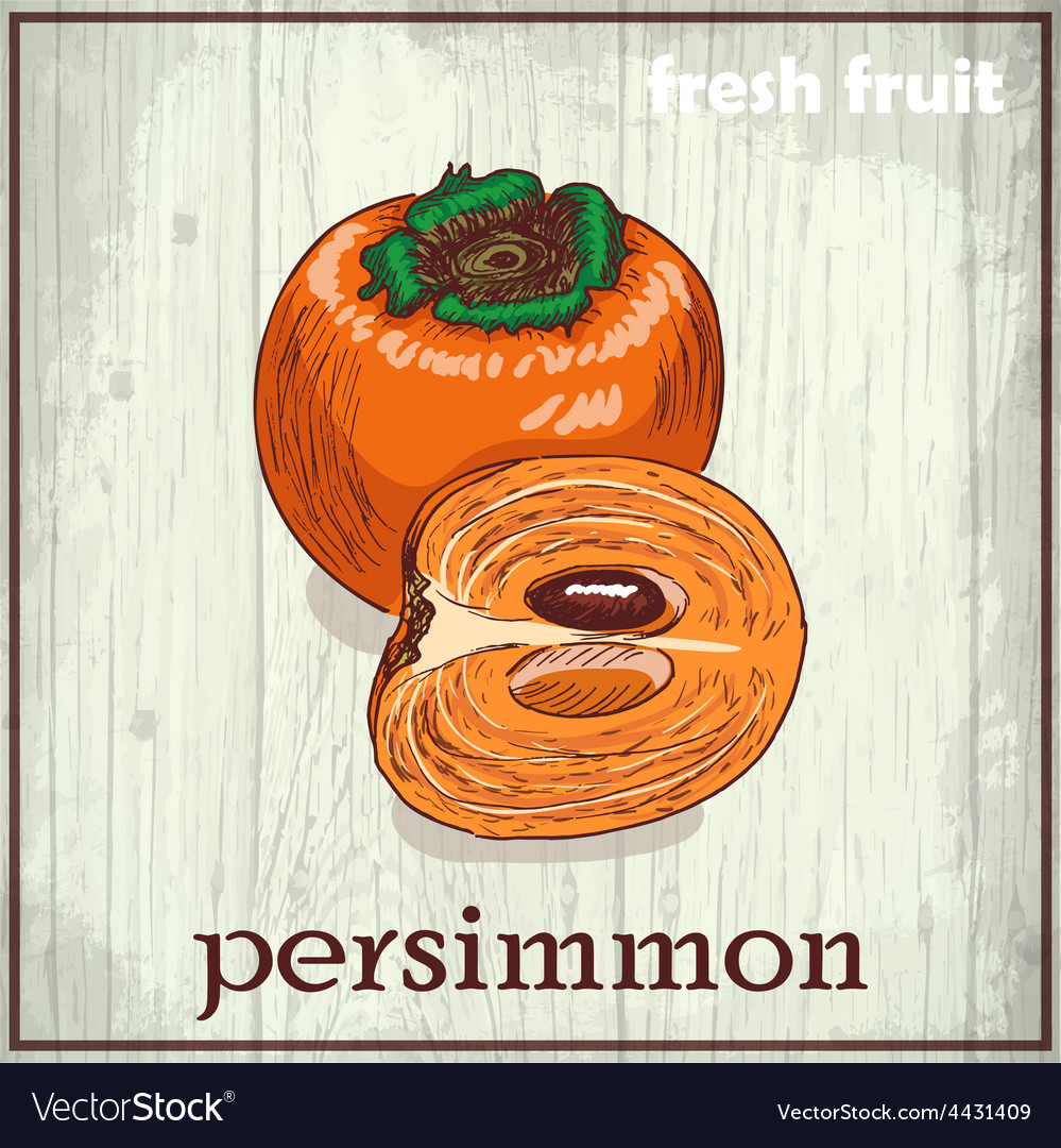 Hand drawing of persimmon fresh fruit sketch vector | Price: 1 Credit (USD $1)