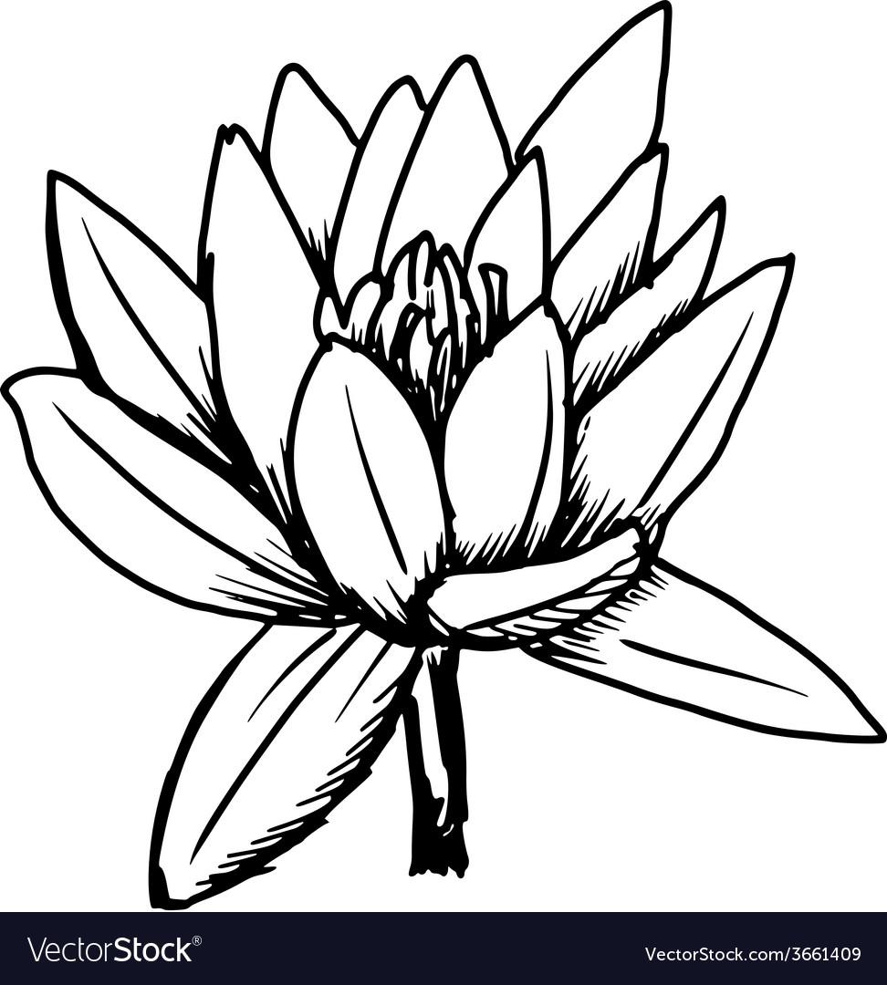 White lotus vector