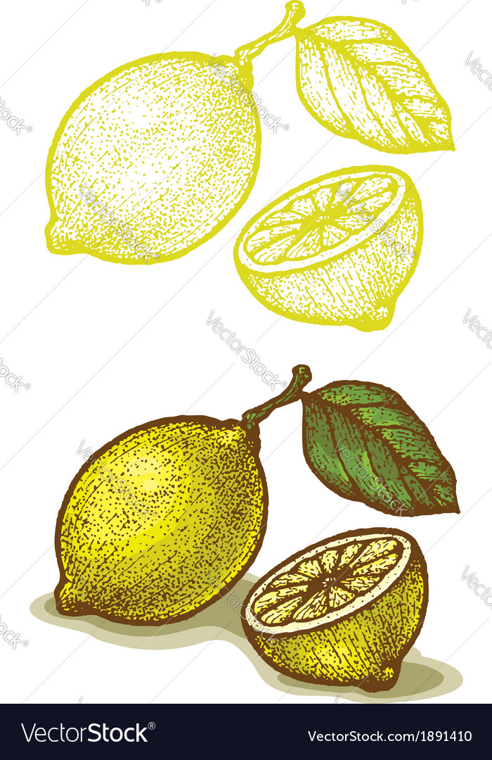 Lemon retro vector | Price: 1 Credit (USD $1)