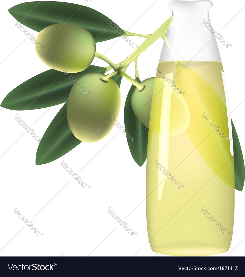Olive branch and bottle of oil vector | Price: 1 Credit (USD $1)