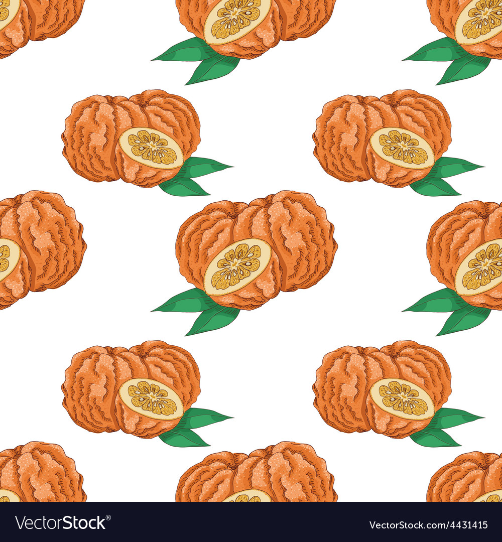 Seamless pattern with bitter orange vector | Price: 1 Credit (USD $1)