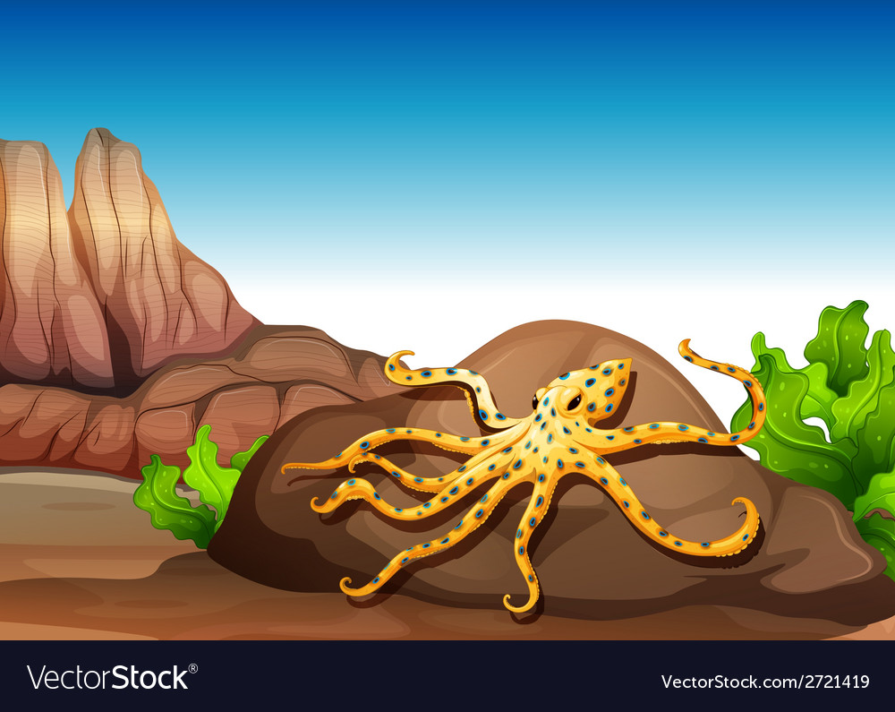An octopus at the rock vector | Price: 3 Credit (USD $3)
