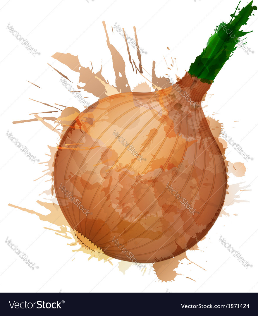 Onion made of colorful splashes vector   Price: 1 Credit (USD $1)