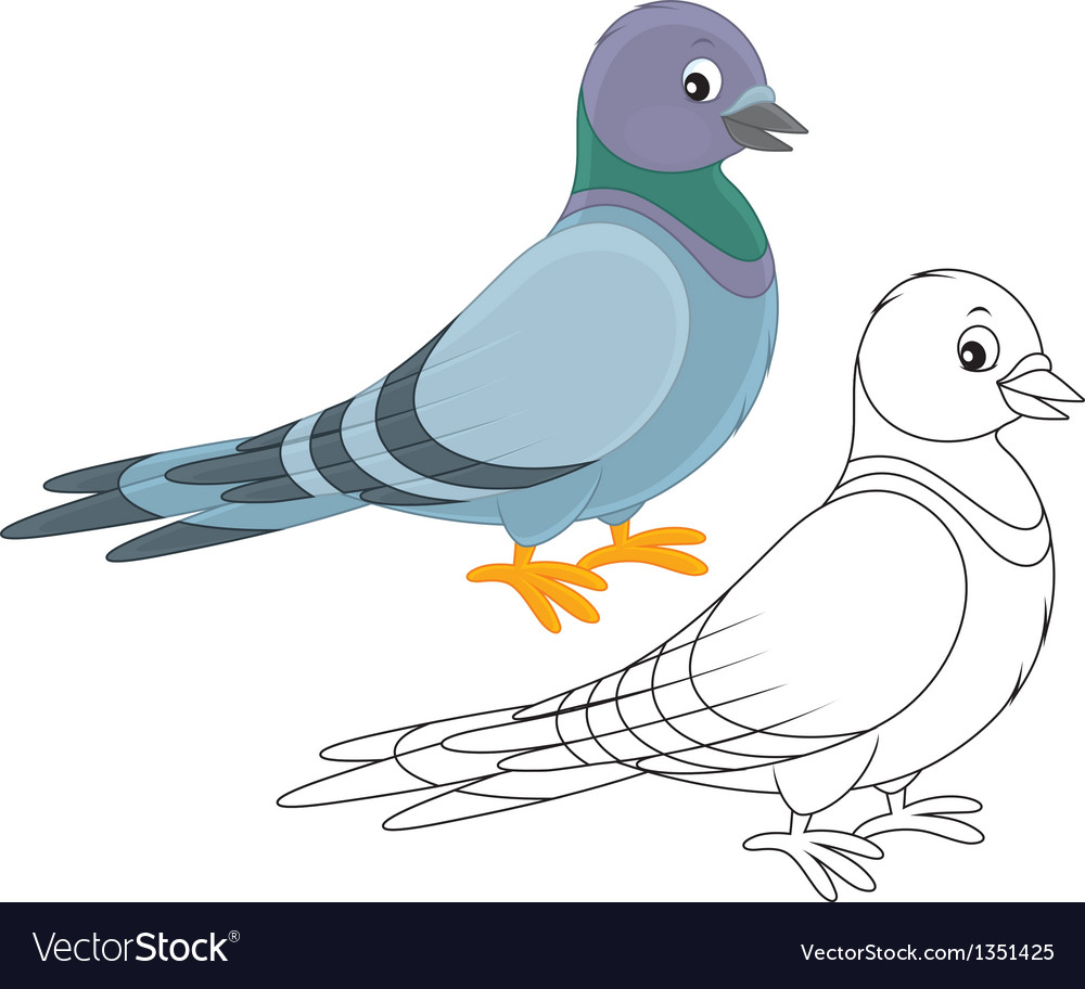 Pigeon vector | Price: 1 Credit (USD $1)
