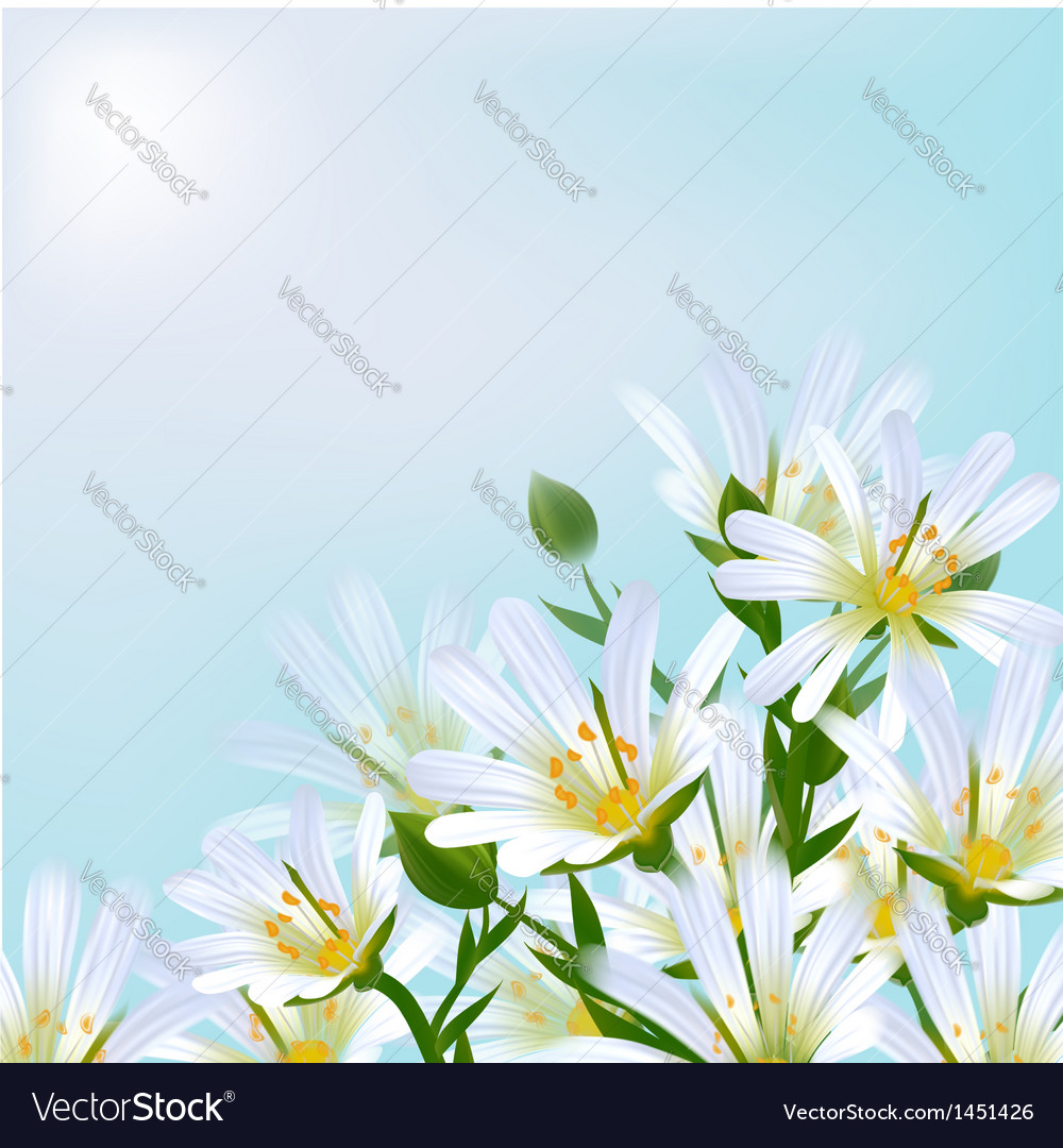 Floral background daisies vector | Price: 1 Credit (USD $1)