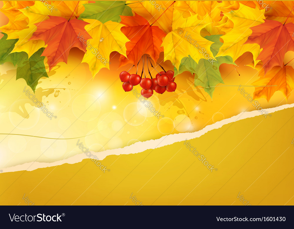 Autumn background with colorful leaves and ripped vector | Price: 1 Credit (USD $1)