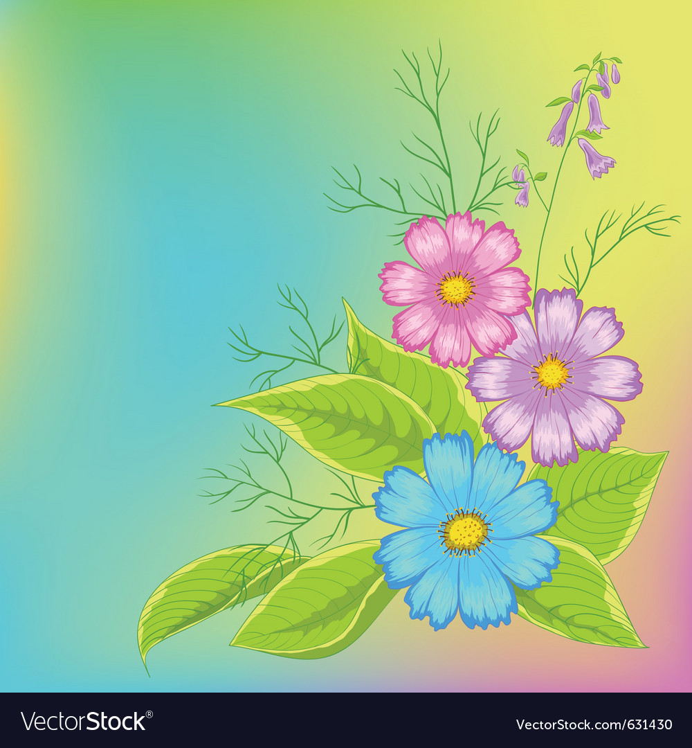 Flower background cosmos vector | Price: 1 Credit (USD $1)