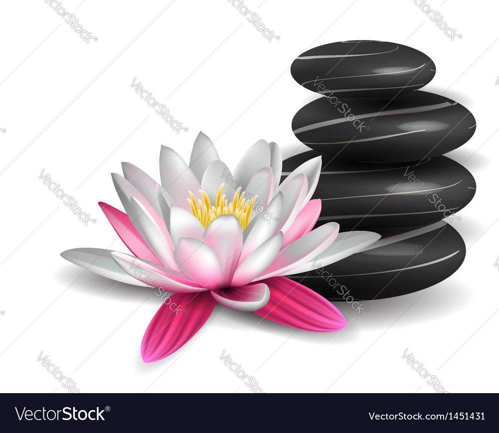 Water lily and zen stones vector | Price: 1 Credit (USD $1)