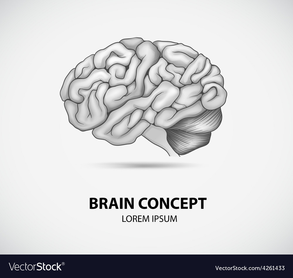 Brain concept vector | Price: 1 Credit (USD $1)