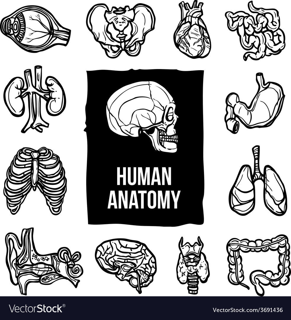 Anatomy icons set vector | Price: 1 Credit (USD $1)
