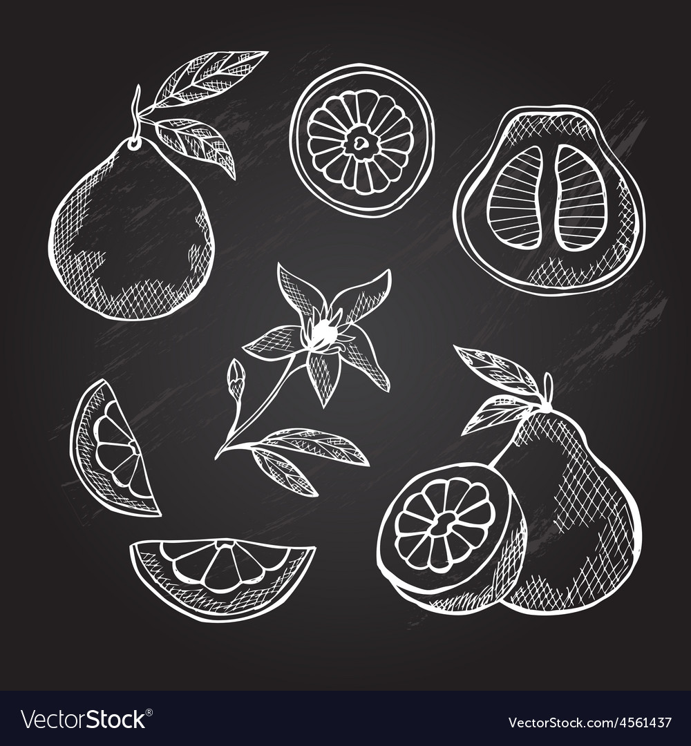 Hand drawn pomelo fruits vector | Price: 1 Credit (USD $1)