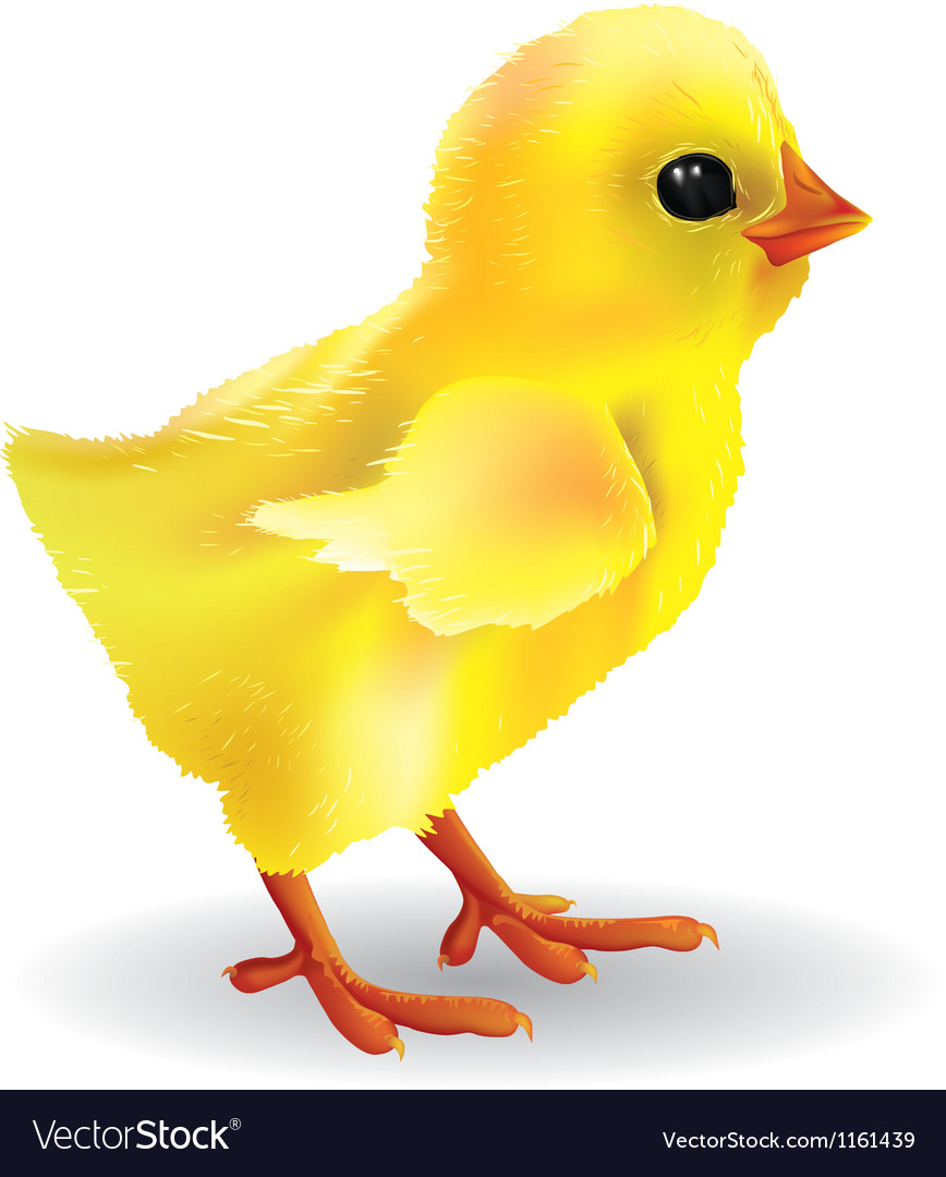 Baby chick vector | Price: 1 Credit (USD $1)