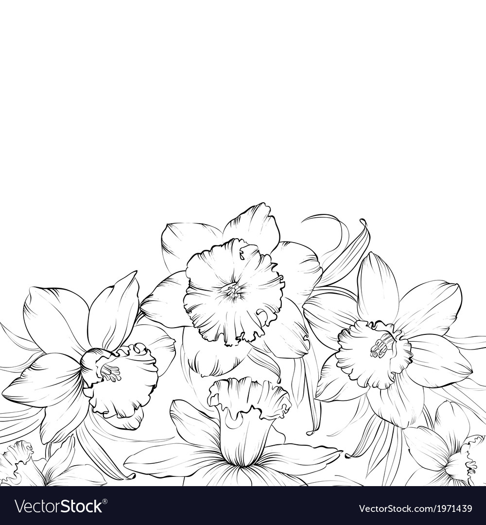 Narcissus flowers isolated on white background vector | Price: 1 Credit (USD $1)
