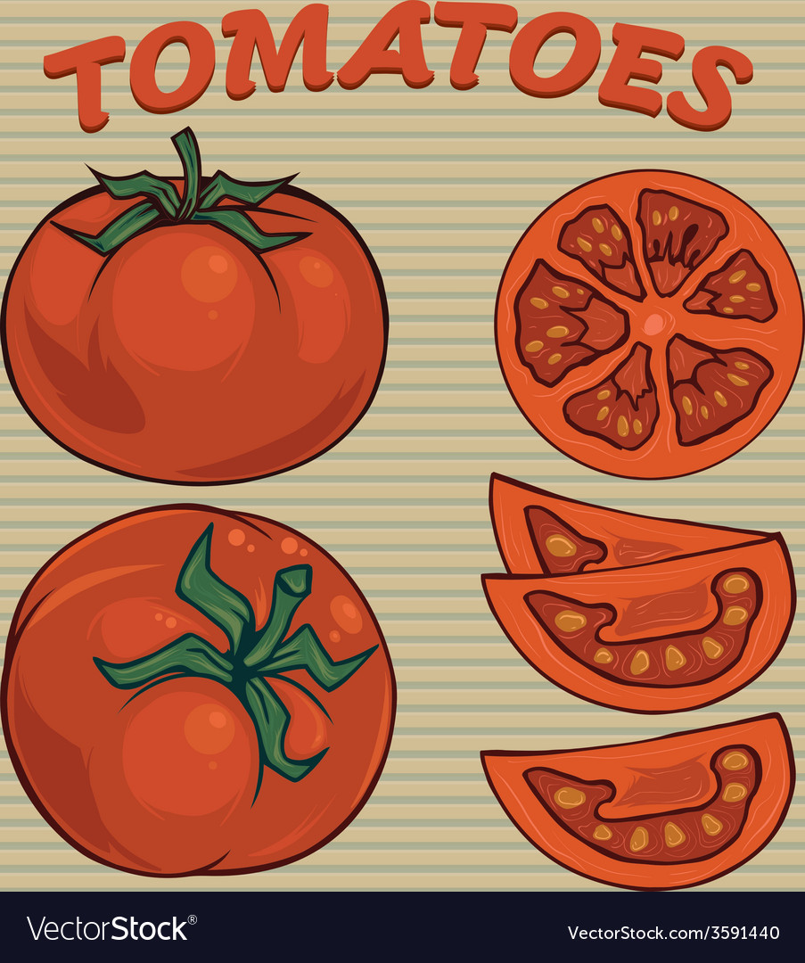 Tomato sethand drawn tomatoes vector | Price: 1 Credit (USD $1)