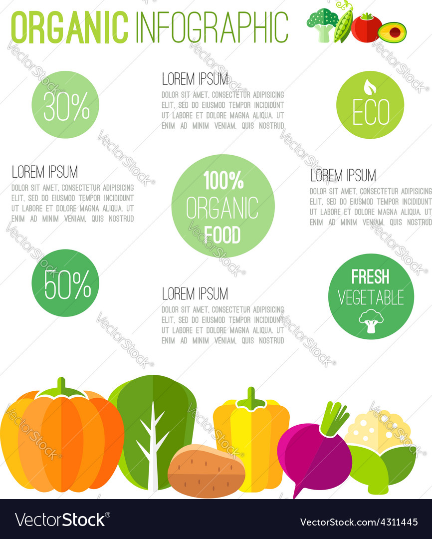 Organic infographic fresh vegetables vector | Price: 1 Credit (USD $1)
