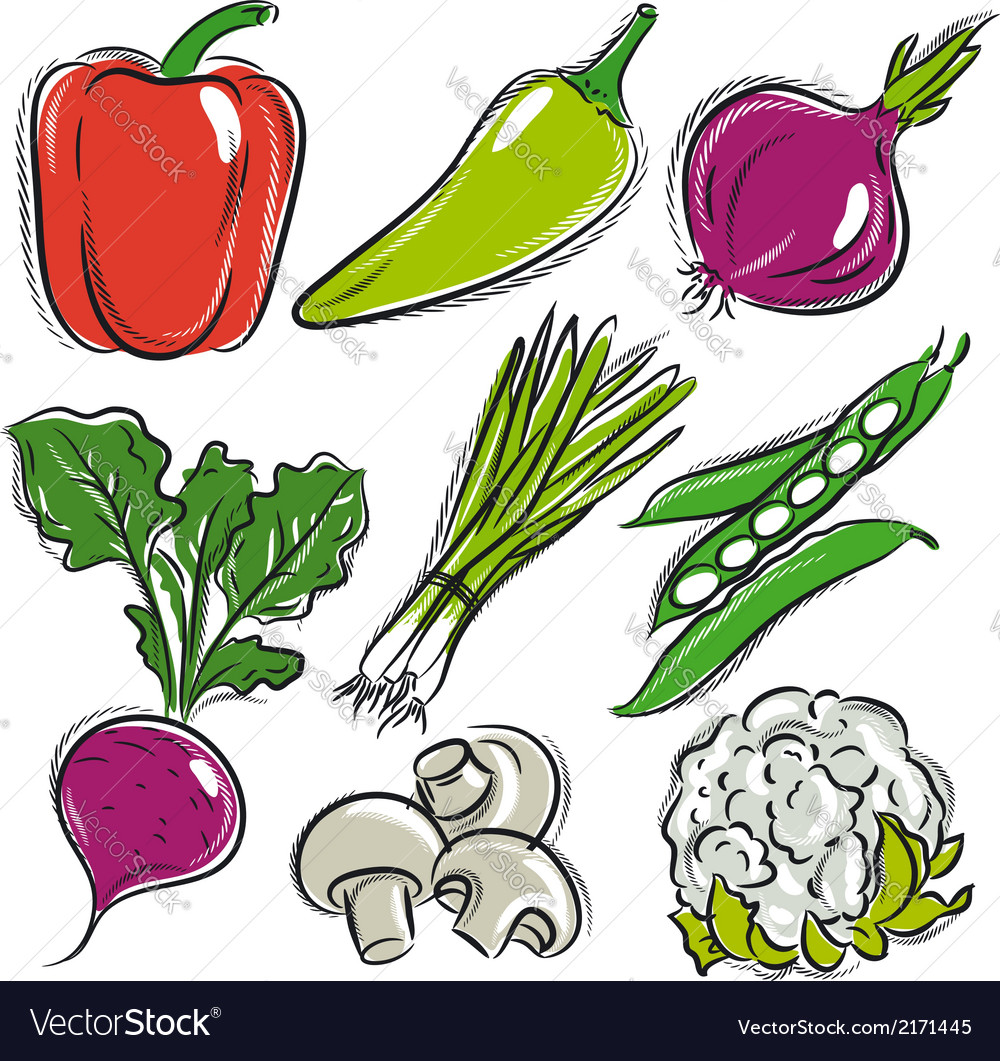 Set of vegetable pepper onions beans vector | Price: 1 Credit (USD $1)