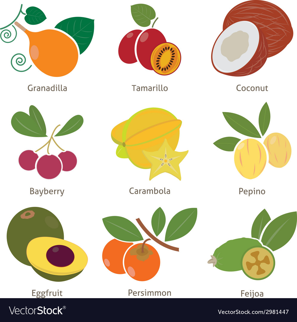 Fruits and berries vector | Price: 1 Credit (USD $1)