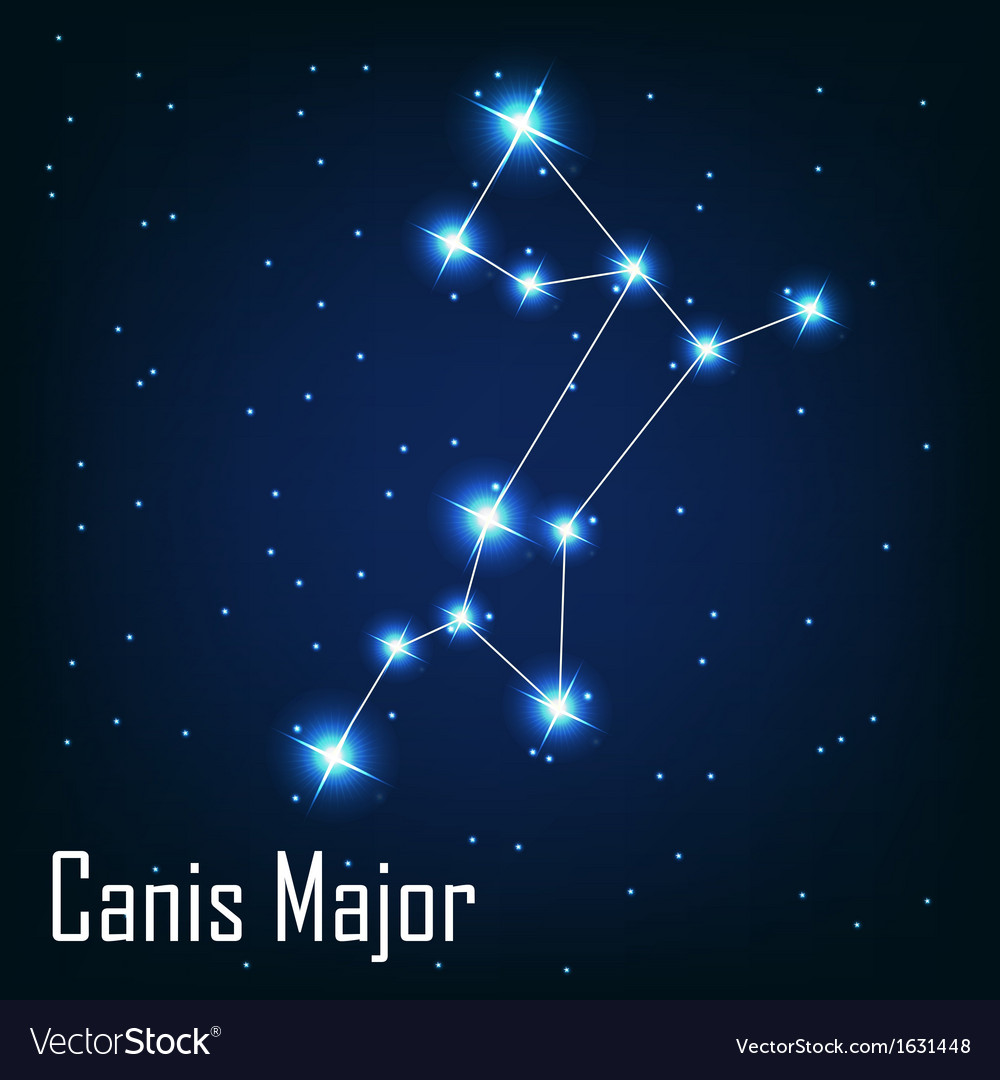 The constellation  canis major star in the night vector | Price: 1 Credit (USD $1)