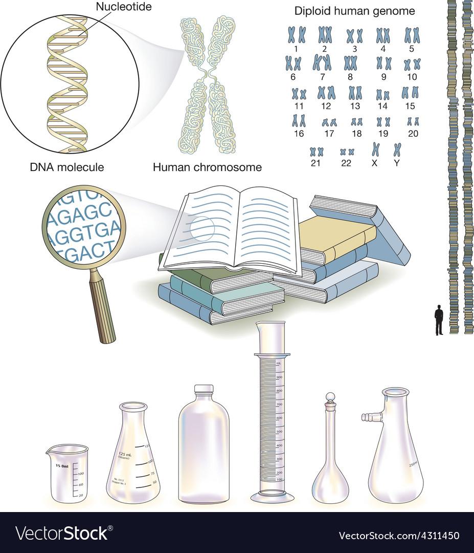 Genetics vector | Price: 1 Credit (USD $1)
