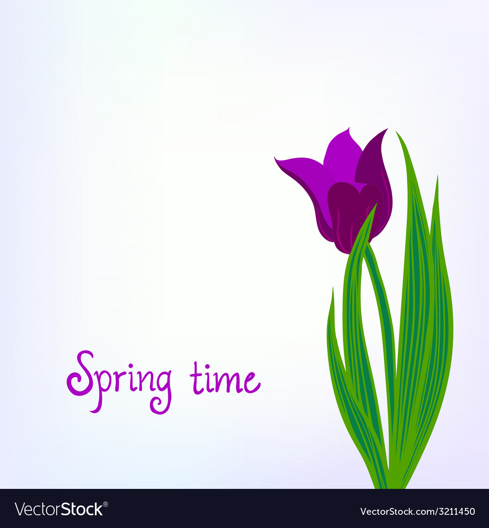 Spring card background with purple tulips vector | Price: 1 Credit (USD $1)