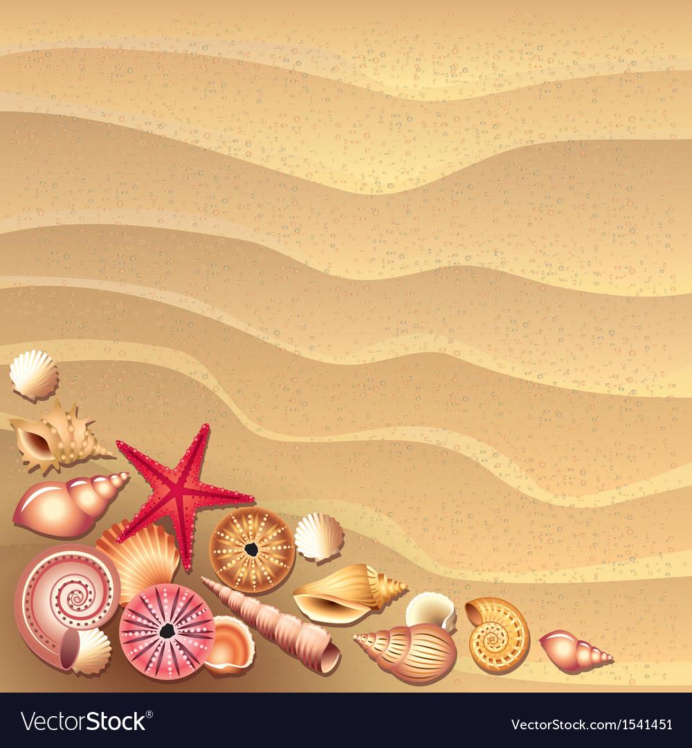 Shells sand vector | Price: 1 Credit (USD $1)