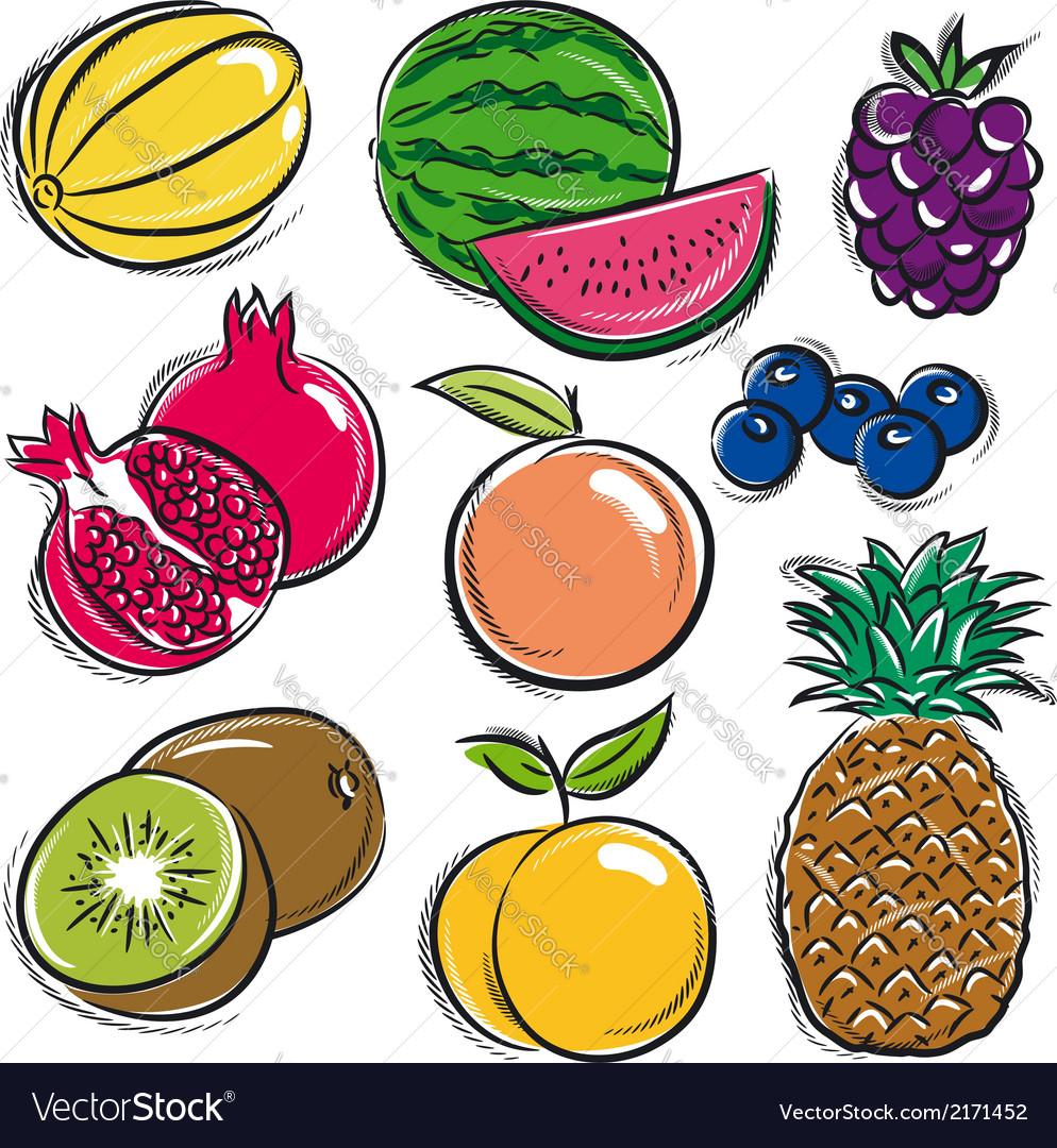 Set of fruits melon watermelon blackberry peach vector | Price: 1 Credit (USD $1)