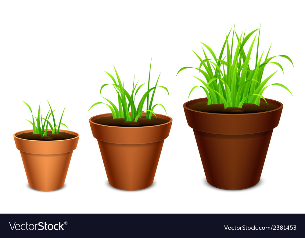 Growing grass vector | Price: 1 Credit (USD $1)