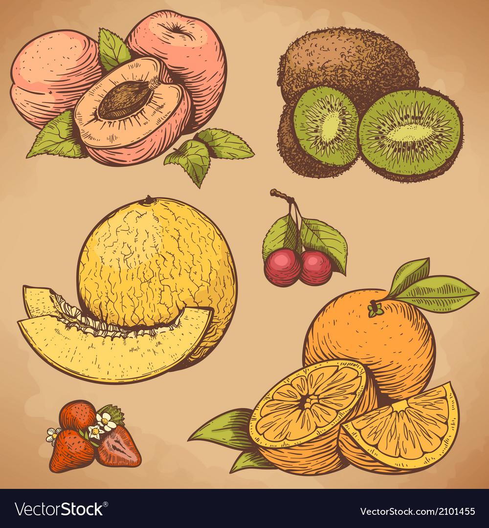 Engraving fruits color vector | Price: 1 Credit (USD $1)