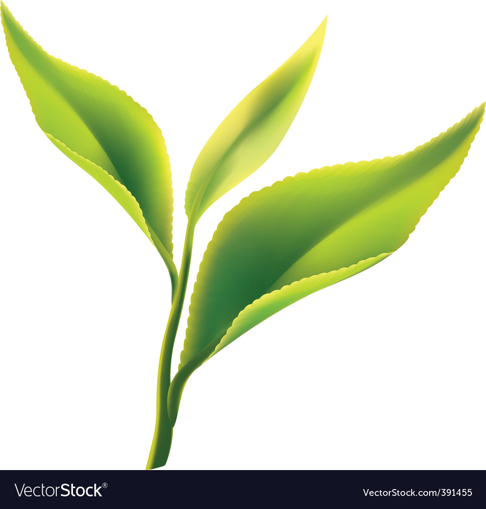 Tea leaves vector | Price: 1 Credit (USD $1)