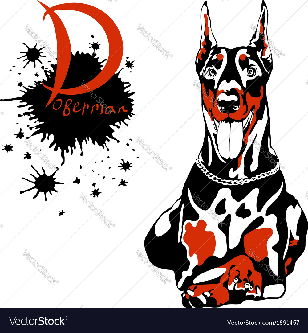 Dog doberman pinscher breed lying and smilling vector | Price: 1 Credit (USD $1)