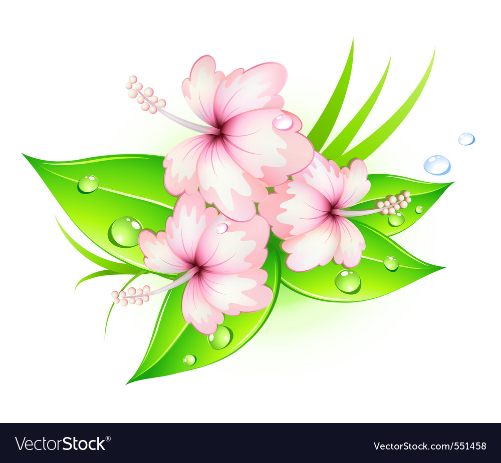 Summer hibiscus vector | Price: 1 Credit (USD $1)